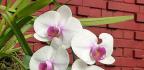 Přesazování orchidejí