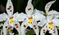 Péče o orchideje po odkvětu
