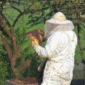 Jak chovat včely